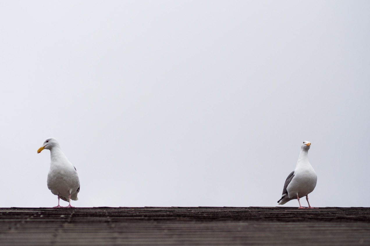 The Seagulls